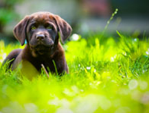 "New Laws Tackle ""Backstreet"" Puppy Breeders"